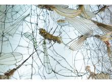 """Pressbild för """"Insekt Insikt"""" med verk av Annika Liljedahl och musik av Lo Kristenson"""