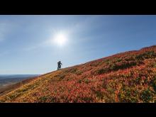 Høstfarger på fjellet