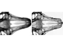 Scint-X röntgenteknik