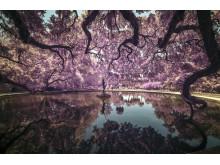 SWPA2019_Tonino Vicari_United States of America_Open_Landscape