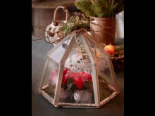 Julstjärna 2020 mysig jul med stjärna i terrarium