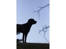 Nyårsfyrverkeri och skotträdd hund