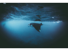 Photo Credit: Daniel Hunter, Manta, UK, Open Competition Entry