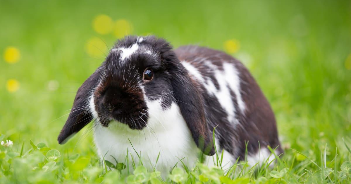 kan kaniner äta banan