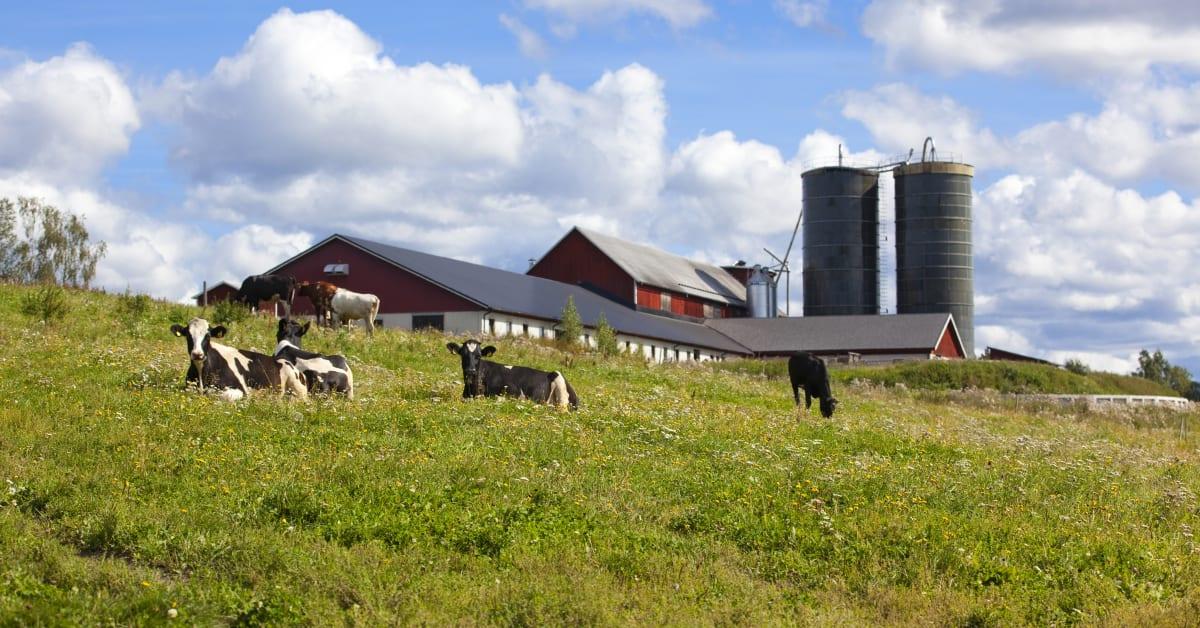 Asp 246 G 229 Rd I 197 Ngermanland Norrmejerier
