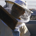 """Aroundtown commits to biodiversity - """"Aroundtown Hums"""" bee project"""