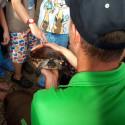 Maus-Türöffner-Tag: Schildkröte