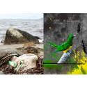 Gatukonst, ornitologi och historieberättande - Från skräp till skulptur och åter till skräp - teman på Kulturcentrums kommande utställningar