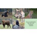 Braunbär, Grauwolf und Co. – Der Wildlife Travel Index von PaulCamper gibt Tipps für Wildtierbeobachtungen