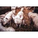 Weltverbrauchertag: Tierwohl vs. Billigfleisch - nachhaltig konsumieren