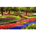 Möt våren i Holland - Blommornas land