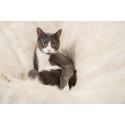Pfoten in Pose: So wird ihr Haustier zum Instagram Star
