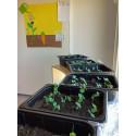 Kasvit kasvavat Vaasassa.jpg