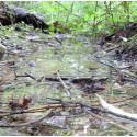 Schutz eines Biotops: Goetheanum beantragt beim Bundesgericht provisorischen Baustopp