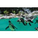 Tierischer Spaß zum Beginn der Sommerferien: PLAYMOBIL und der Zoo Salzburg laden zur großen Zoo-Rallye ein