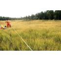 Ny HaV-rapport: Kalkade våtmarker kan återhämta sig och återfå naturlig växtlighet
