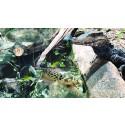 Tierischer Spaß in den Sommerferien: PLAYMOBIL und der Reptilienzoo Forchtenstein laden zum großen Zoo-Quiz ein