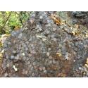 Fant flere tonn etterkrigsmynt i skogholt i Buskerud
