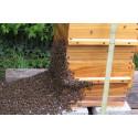 DOYMA-Pressemitteilung: Fleißige Bienen - Ein wichtiger Beitrag zum Naturschutz
