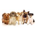 Årets husdjurshjältar nominerade