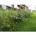 Søg Odder Kommunes pulje til biodiversitet