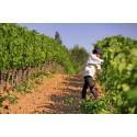 Miljöbild Foncalieu vingård