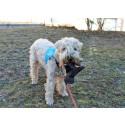 Terapihunden Filur hjälper unga att må bättre