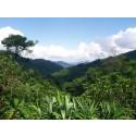 The Body Shop genplanter 75 millioner kvadratmeter regnskov i Vietnam