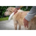 DogShower: En innovasjon innen hundepleie