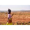 KfS bidrar för att minska hungerpandemin