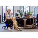 Mit Hund ins Büro? So klappt der Arbeitsalltag mit Haustier nach Corona #MeinTierbleibtbeimir