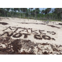 Sargassum: The Climate Activist Under The Algae