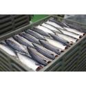 Norwegian seafood exports exceed NOK 90 billion in 2018