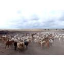 """Kommentar zum UN-Nachhaltigkeitsforum in New York: """"Das Wohl der Tiere in den Fokus stellen"""""""