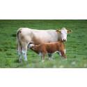 Ny rapport: Svensk mjölk- och nötköttsproduktion kan nå Parisavtalets klimatmål