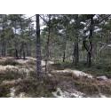 Konst i naturen upphandlas till Kristineberg