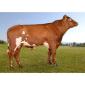 Outstanding lineup of Norwegian Red sires available after the August 2020 proof run