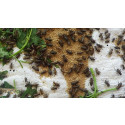 Insekter kan vara bra mat, men produktionen måste också vara miljömässigt hållbar