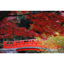 """The Charming, Well-Preserved """"Little Edo"""" Town of Koedo Kawagoe, is Even More Compelling in the Brilliance of Mid-November Autumn Foliage"""