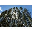 Smurfit Kappa definerer nye bærekraftsmål med Better Planet 2050