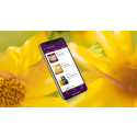 Gula-blommor1-app.jpg