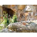 Tierischer Spaß: PLAYMOBIL und der Zoo Berlin laden zum großen Zoo-Quiz ein