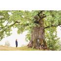 Forteller historien til trettitre av Norges eldste og største trær
