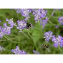 Pandemiens store trend kan være redningen for pollinatorene