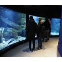 Nya akvarier på plats med inspiration från miljöer i Gullmarsfjorden