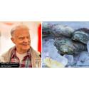 AKTUELT: Suget etter østers fortsetter å øke
