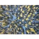 Simulerer risiko for klimaskade på skog