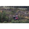 Minskade skogsavverkningar ger stor och omedelbar klimatnytta