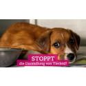 """""""Stoppt Tierleid in den sozialen Netzwerken"""" - Neue Kampagne der Welttierschutzgesellschaft gegen Tierquälerei auf Facebook, Instagram & Co."""