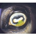 Fundamentals of Equine Ophthalmology Workshop, 29th of April